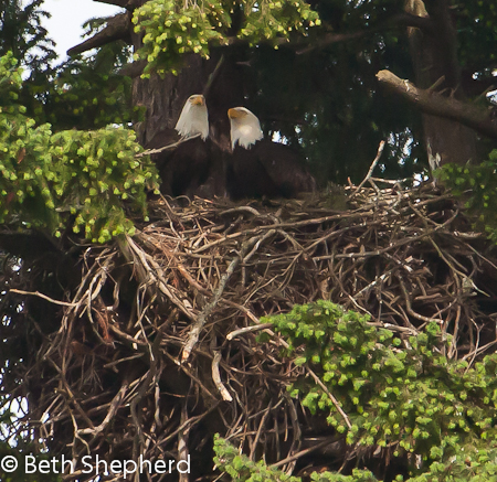 Mr and Mrs Eagle