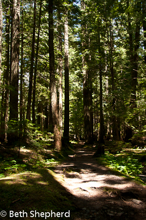 On the Wonderland Trail, Mt. Rainier