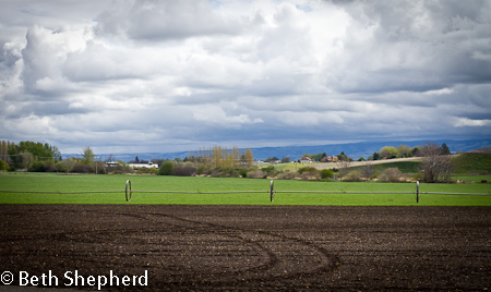 Walla Walla clouds and fields