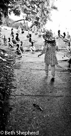 Chasing ducks 1