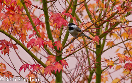 Birds in autumn leaves