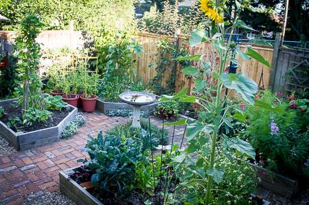 Garden in August 2014