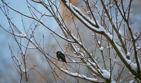 Hummingbird on snowy branches