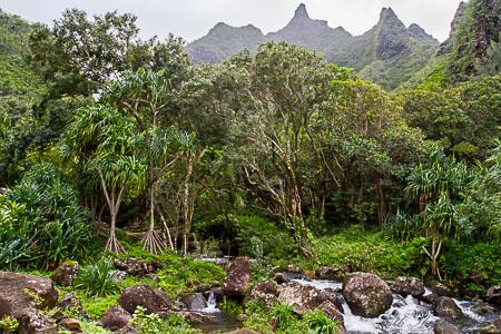 endangered tropical plants