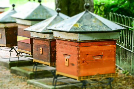 Beautiful bee boxes