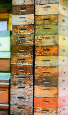 Bee houses Jardin du Luxembourg