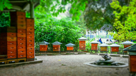 Bees in Jardin du Luxembourg