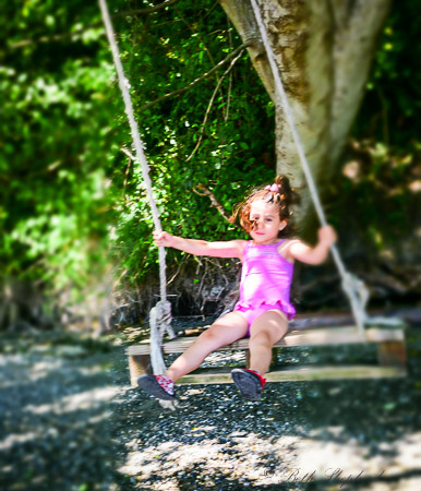 Rope swing at the beach