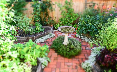 Garden beds in August