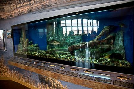 Indigenous fish tank at The REACH