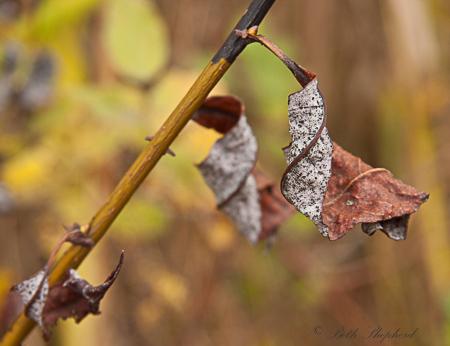 Leaves turning