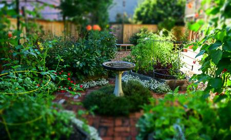 Our garden in August