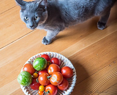 ally and garden tomatoes