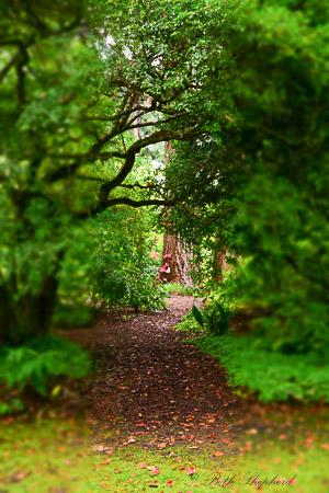 Dunn Gardens: A secret garden