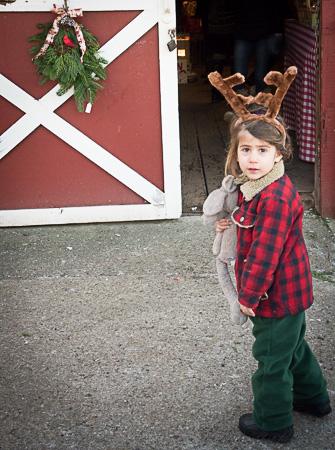Christmas tree hunting 2014 reindeer