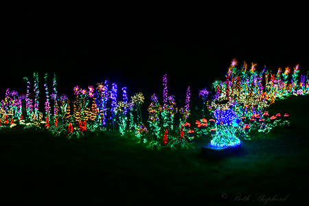 Garden d'Lights in Bellevue