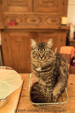 Winslow in dish