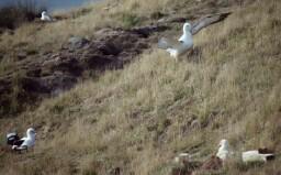 albatross-4.jpg