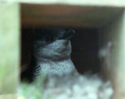 penguin-b.jpg