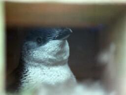 penguins & albatross (part three) - Tea, Sugar, a Dream