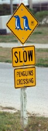penguin-crossing.jpg