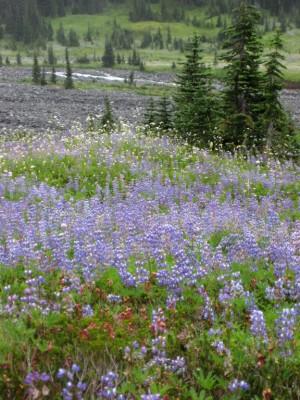 walk-in-wildflowers-300-x-400