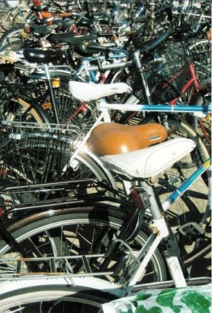 bike seats (305 x 450)