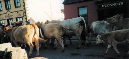 cows 2 (450 x 206)