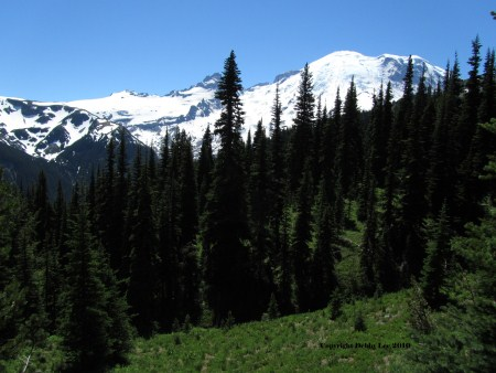 Mt Rainier 3_edited-1 (450 x 338)