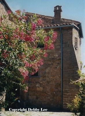 Civita di Bagnoregio Flowers 4