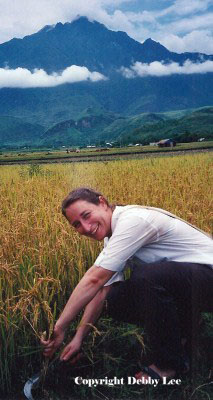 Debby Cutting Rice Vietnam