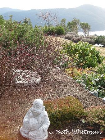 Aerie Buddha
