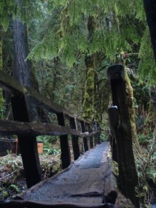 Olympic Peninsula hiking