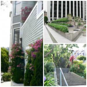 San Francisco gardens