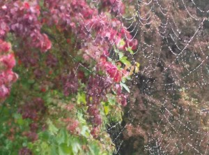 Spider web and tree
