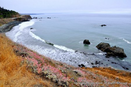 Rugged Pacific Coastline
