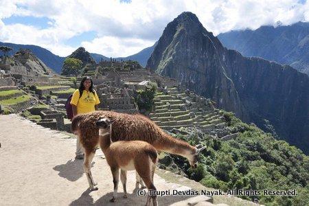 With llamas at Machu Picchu