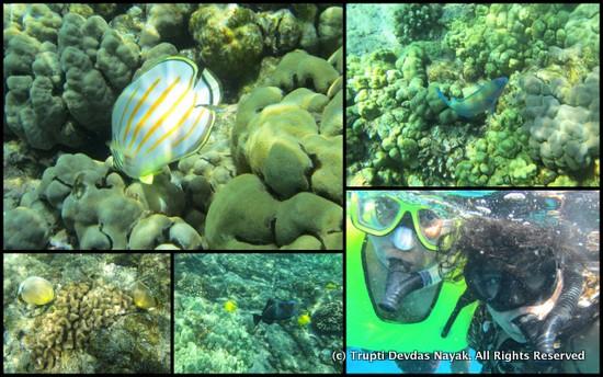 Snorkeling Kona Beaches