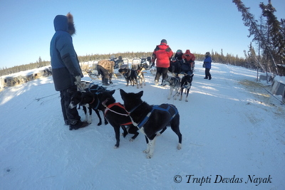 Dog sledding in Yellowknife, Canada: Say mush and hold on!