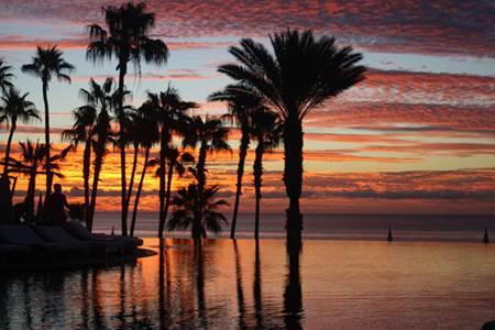 Sun over Palms