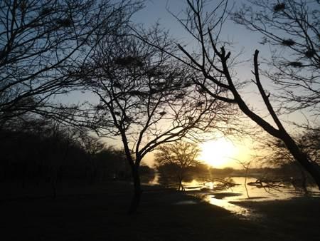 Thol Bird Sanctuary Ahmedabad India