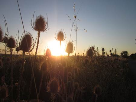 Field Sunrise Spain