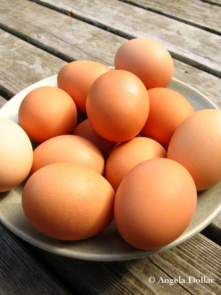 egg #39;/s