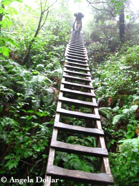 WCT ladder