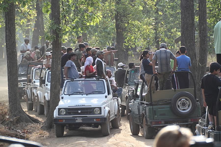Tiger tourists in India