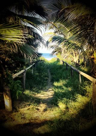 Baja Mexico beach path