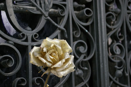Rose-at-Pere-Lachaise-Cemetary-Paris