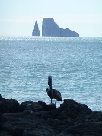 Ecuador-Galapagos-Kicker-Rock-pelican