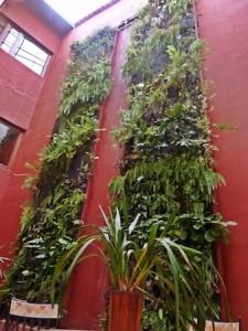 Casona de la Ronda Quito verical garden