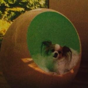Dog Sleeping Pod
